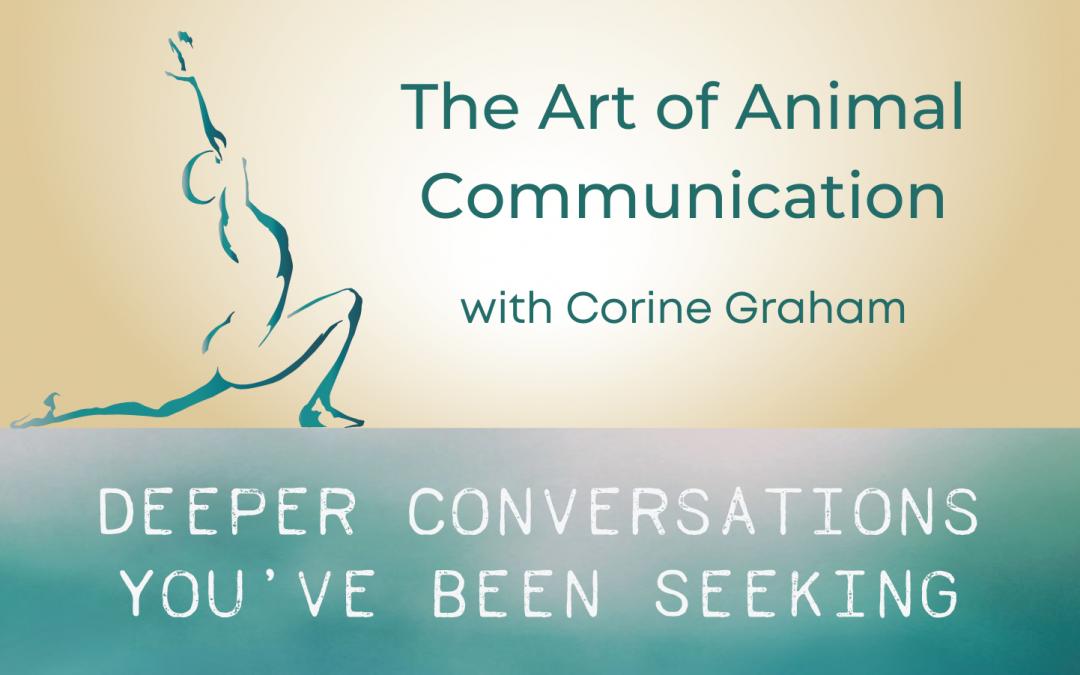 Animal Communication with Corine Graham